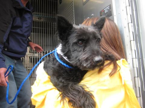 In Response to Hurricane Harvey, PetSmart Charities® Donates Three